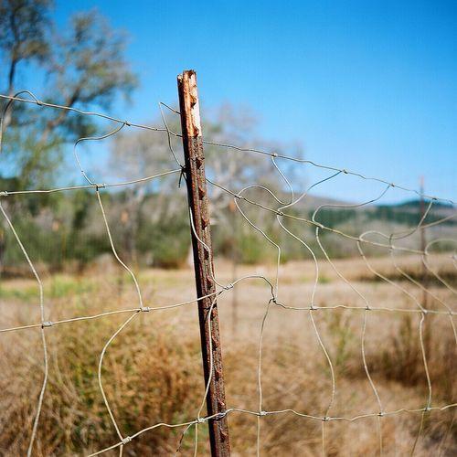 Medium Format Lubitel 166+ Ishootfilm Real Film Fence