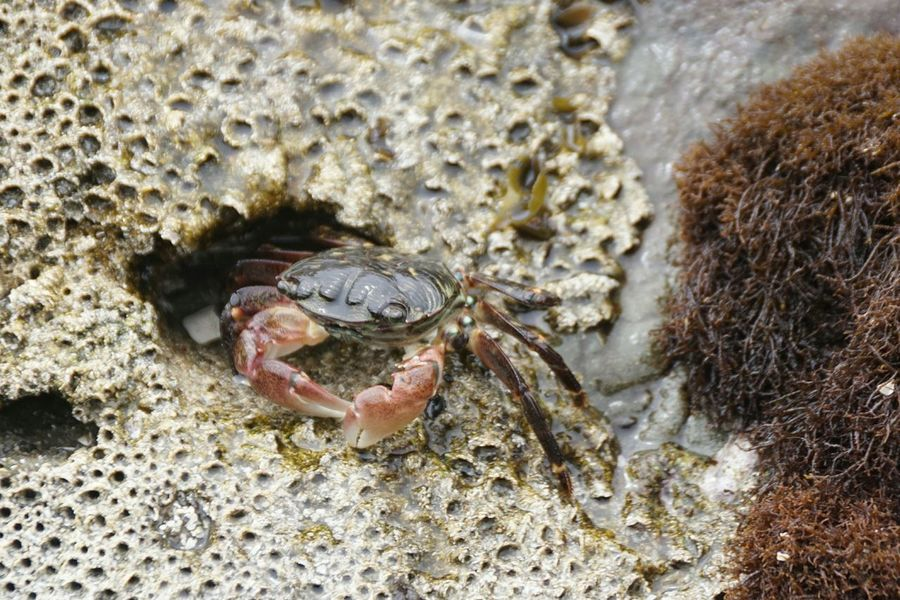 Cayucos Beach Photography On The Beach Beach Marine Life Southern California Crab Tide Pool