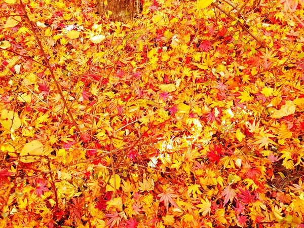 Full Frame Backgrounds No People Nature Autumn Abundance High Angle View Leaf Outdoors Day Beauty In Nature Multi Colored
