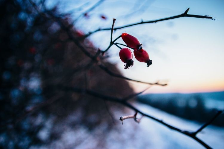 Red Outdoors Full Length Day Low Angle View Nature Sky Nature Taking Photos Winter Tree Grass Forest Plant Vscofilm No People Cold Temperature Landscape Adventure Snow Farbrausch Needle - Plant Part Close-up Backgrounds Cloud - Sky