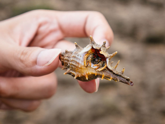 Close-up of person holding crab