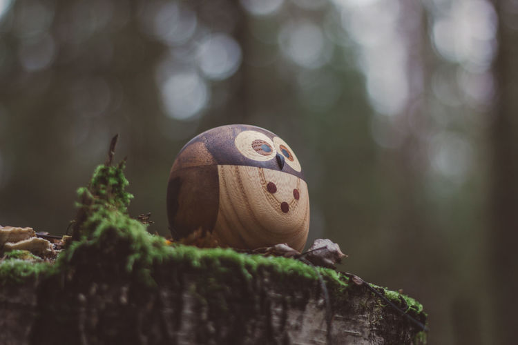 Forest Wood Wooden Wood - Material Toy Toys Wooden Toys Moss Tree Owl Animal Close-up Animal Themes Focus On Foreground No People Selective Focus Plant Day Nature Representation Animal Representation Animal Wildlife One Animal Animals In The Wild Art And Craft Outdoors Solid Rock Rock - Object