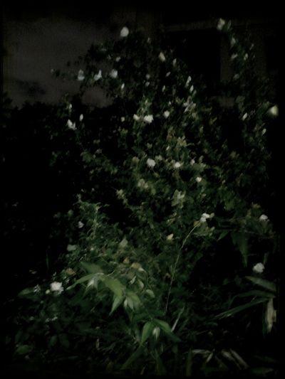 Flower Night