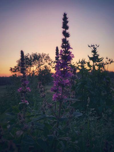 Meadow Summer