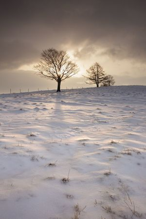 Sunrise Sky Tree Beauty In Nature Plant Scenics - Nature Cold Temperature Tranquility Snow Cloud - Sky Nature No People Landscape