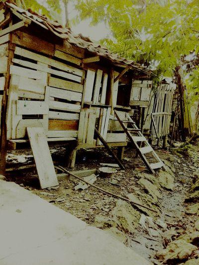 Sepeninggalan Mbah, rumah si unggas pun menyepi, meninggalkan sebuah kosong. Home Nenek Rip Kandangayam