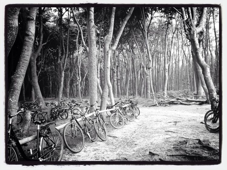 Bike Blackandwhite Hugging A Tree Landscape Photography Nature_collection Bicycles