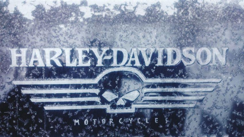 Harley Davidson Harley Plate Frost Huuru Freeze Shots Pakkanen Tervetuloasuomeen Mäntsälä Suomi Finland