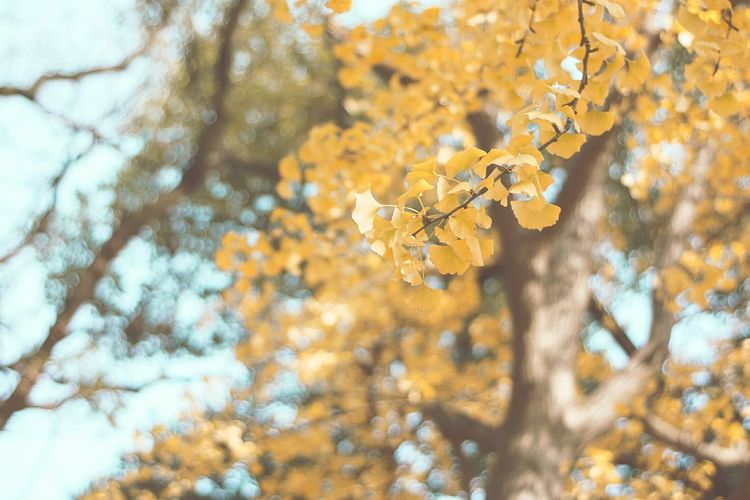 Say goodbye to Fall and say hello to Winter Nature Tree Beauty In Nature Autumn Change Yellow Growth Close-up Outdoors Flower No People Day Sky Branch Tranquility Plant
