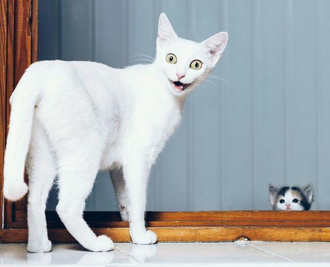 هل تشعر بل خوف من شوف هاذي القطه