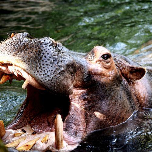 Animal in pond