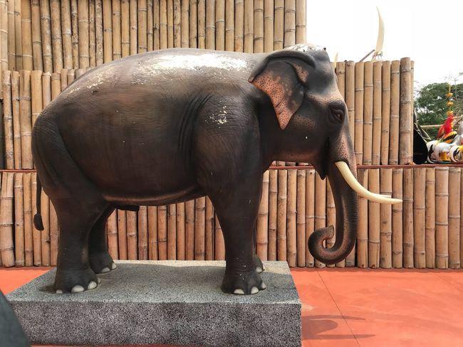 Elephant Mammal Animal Animal Trunk Animal Themes Animal Wildlife Safari Animals Outdoors Animals In The Wild Day Domestic Animals Nature No People African Elephant