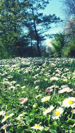 Relaxing Enjoying Life Nature