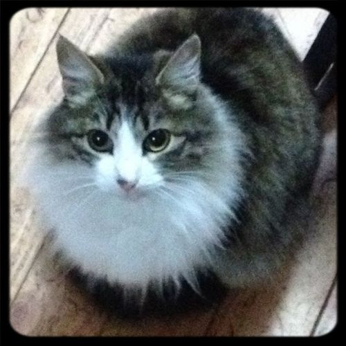 Cat♡ Cute Eyes antoña con cara de buena... si supiera el mundo !