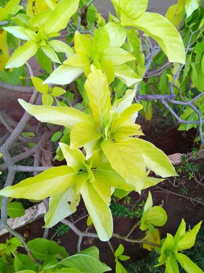GREEEEEEEEENY Growth Green Color Nature Plant Freshness Close-up Leaf Day Springtime Fragility Beauty In Nature