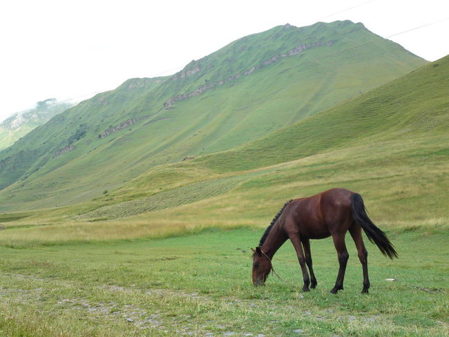 No People Anymal Horse Nature Grass Flower Landscape Backgrounds Day Outdoors Green Color Beauty In Nature Mountain Range Cloud - Sky Sky Mountain Growth Full Frame