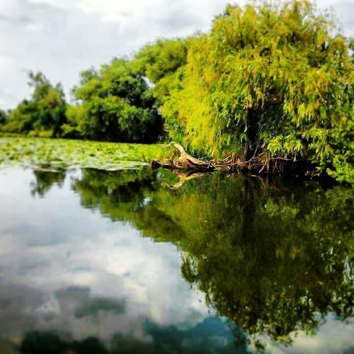 Peaceful Moment Danube Delta ,romania Proud To Be Romanian Silent Landscape