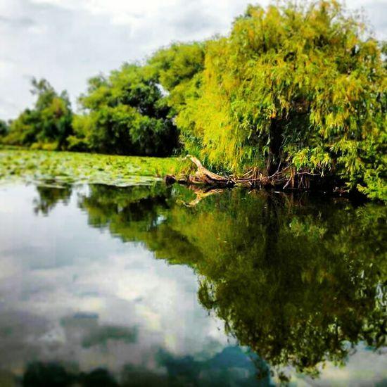 Peaceful Moment Danube Delta ,romania Proud To Be Romanian Silent Landscape
