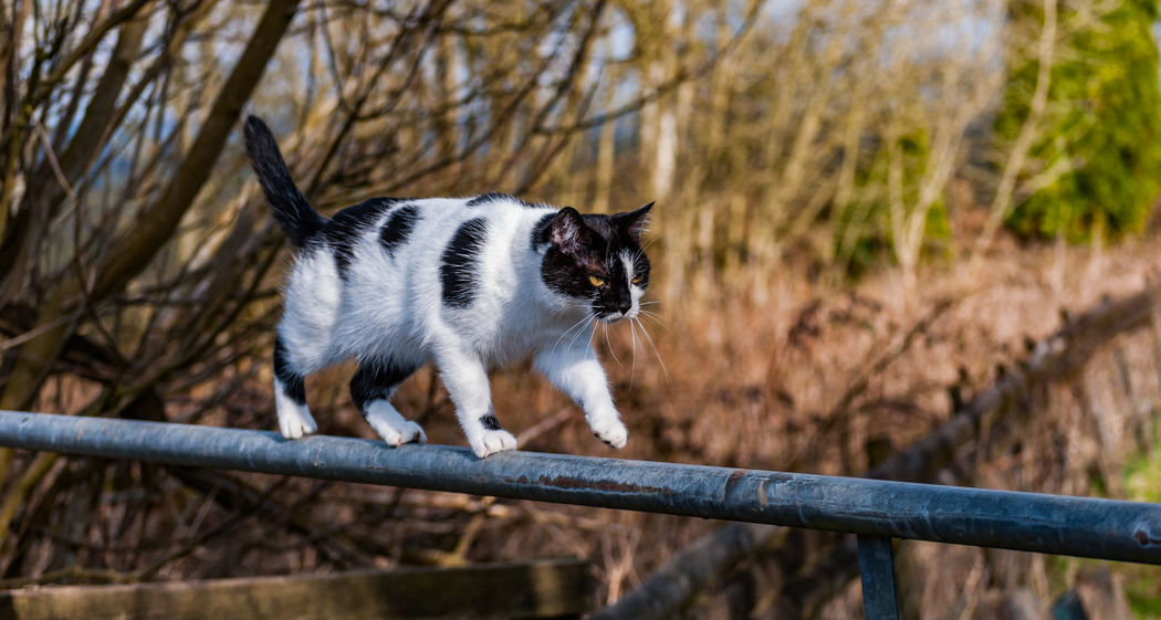 Animal Animal Themes Cat Day Domestic Animals Fance Focus On Foreground Gate Mammal Nature No People Outdoors