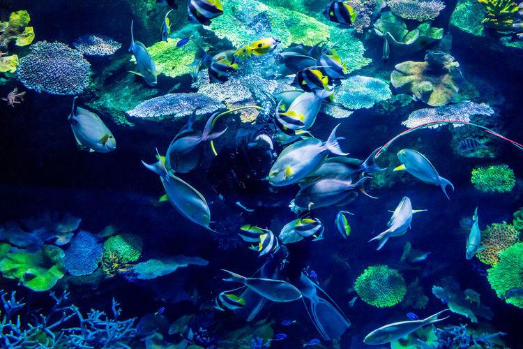 sea life @