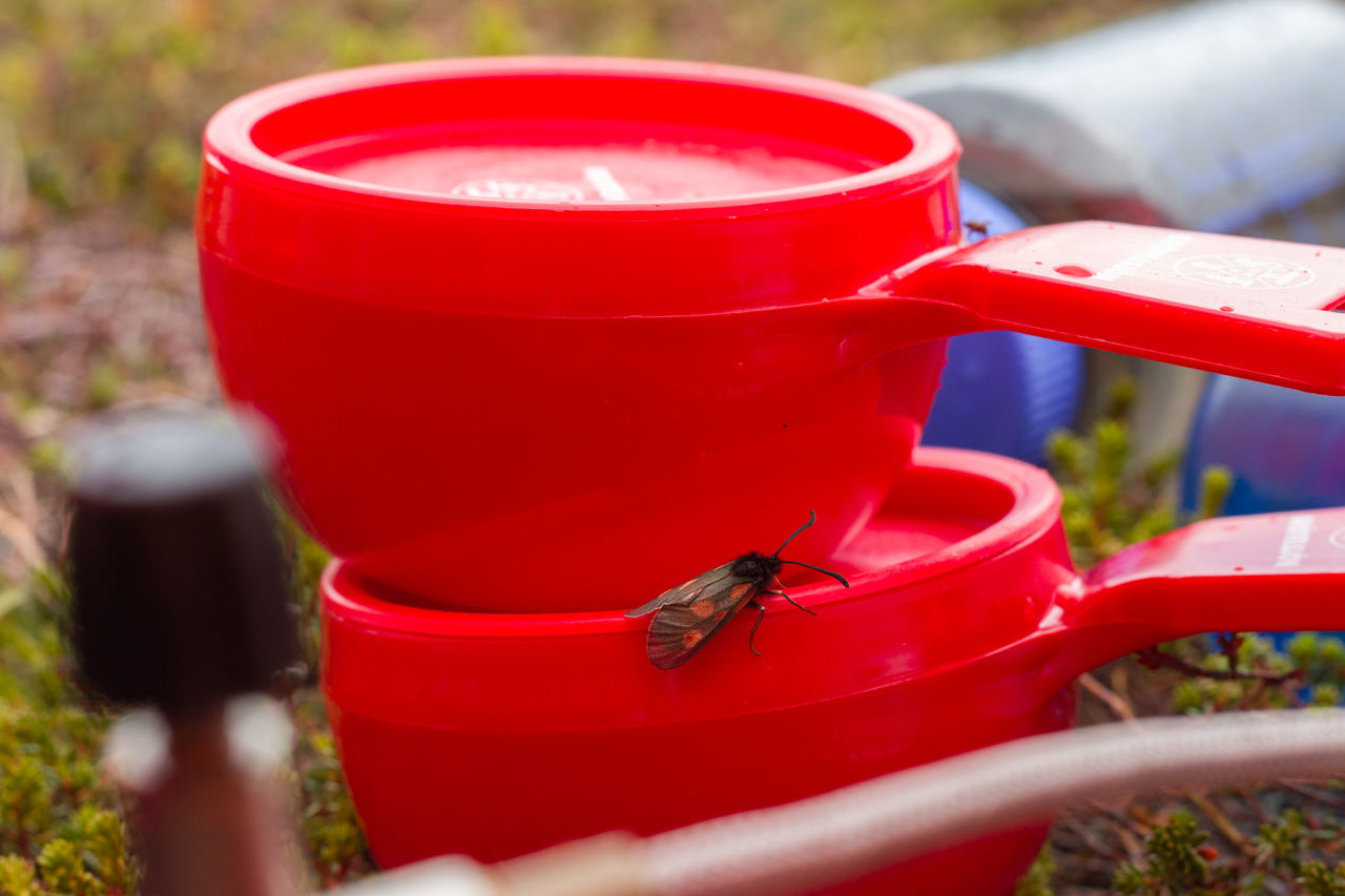 Close-Up Of Housefly On Plastic Cups