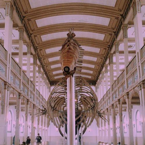 🐳 Wale Museohistorianatural