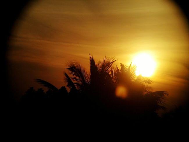 Palm Tree Nature Sunrise Scenics