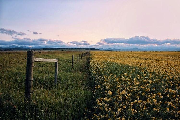 Sunset Alberta