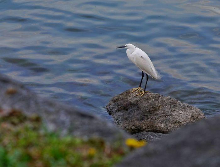 Bird Perching At Lake