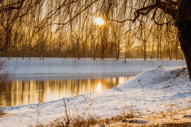Scenic view of river and trees during sunrise