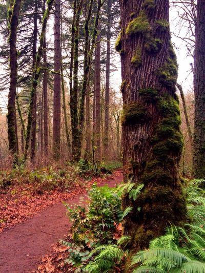 Trillium Trail hike