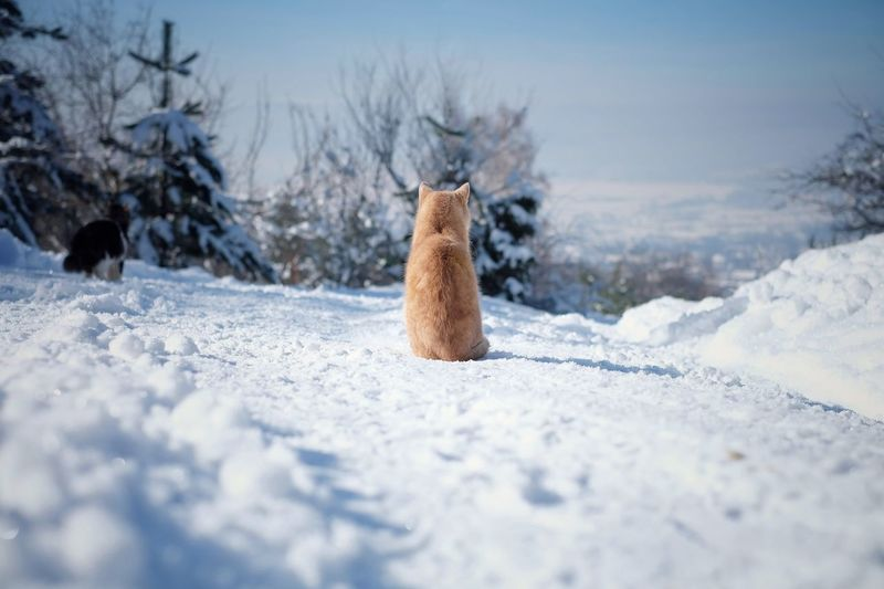 Dog sitting on snowy field
