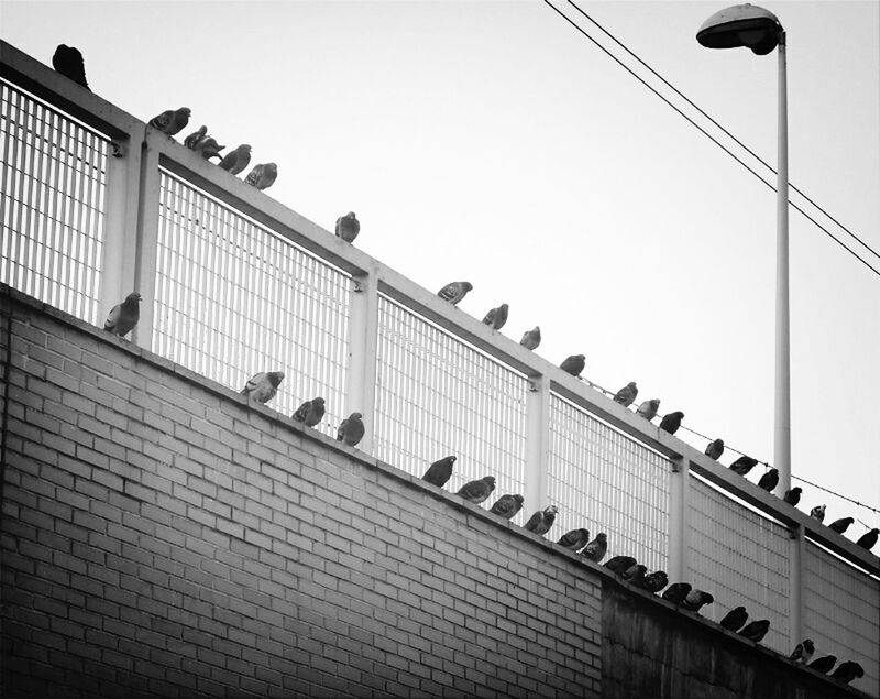 Streetphotography Minimal Pidgeons B&w
