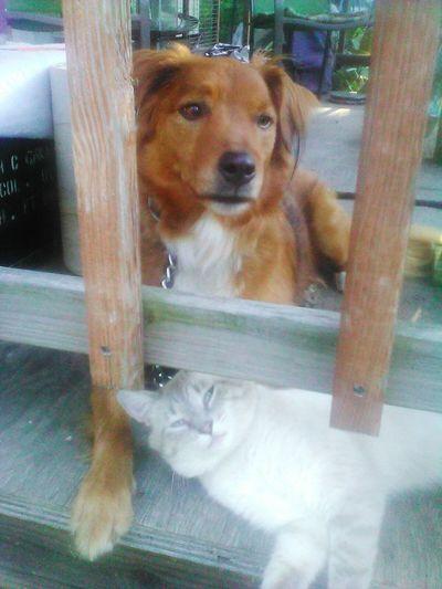 Dog Pets No People Retriever Outdoors Best Friends Cat♡