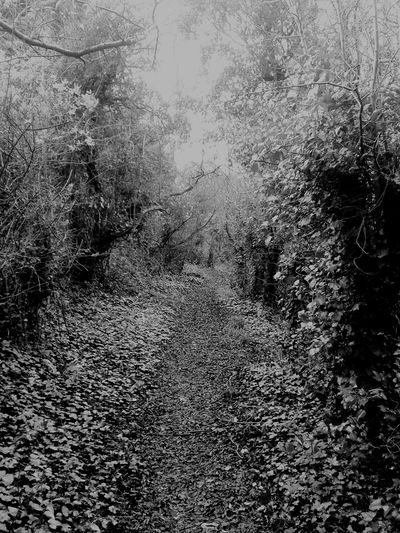 Nature Photography Unease Looming Creepy Dark Beautiful