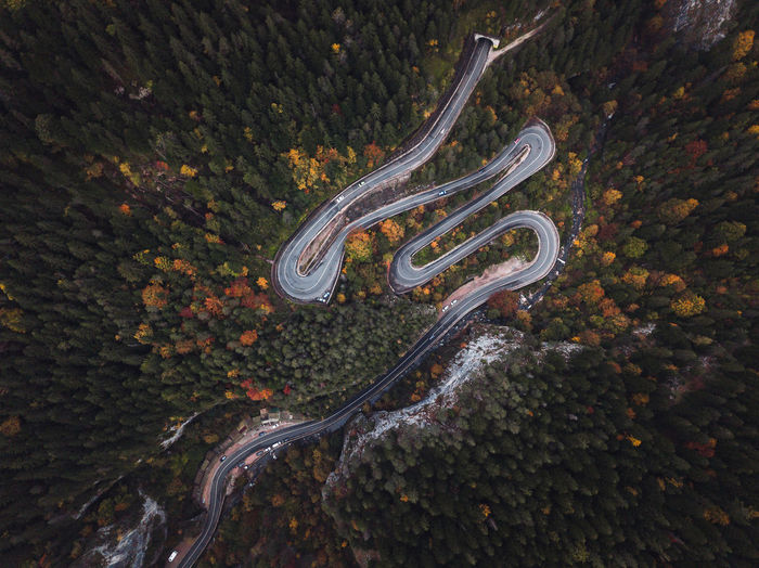 High angle view of autumn tree by road