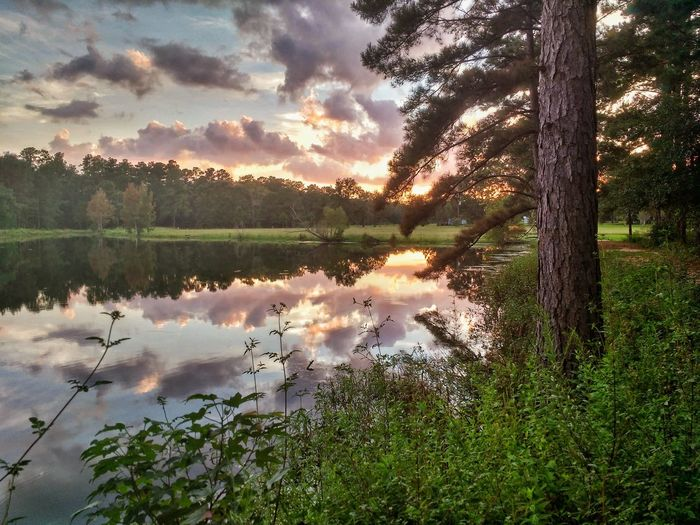 Pond and Sky at Sunset Reflection Lake Tree Nature Cloud - Sky Outdoors Water Growth No People Scenics Tranquility Sky Day Sunset Grass Beauty In Nature Water Golden Hour In Action Bivens