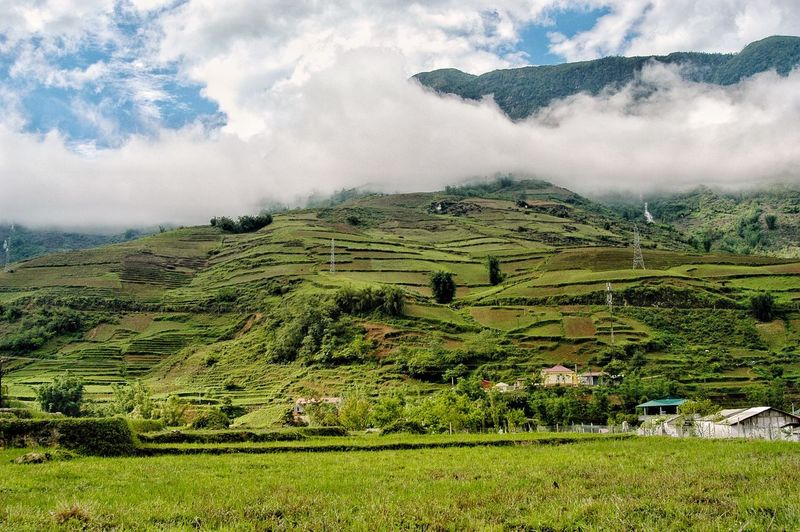 Vietnam SaPa Landscape Environment Land Field Beauty In Nature Scenics - Nature Tranquility Agriculture Tranquil Scene Growth Green Color Plant Rural Scene Cloud - Sky Farm Nature Crop  Day No People Sky
