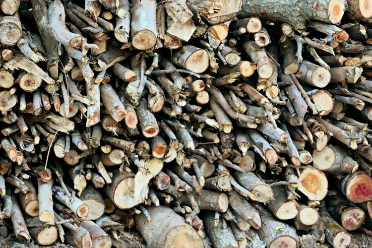 Abundance Large Group Of Objects Full Frame Backgrounds Timber Log Stack Day Outdoors No People Nature Woodpile Forestry Industry Close-up Nature Beauty In Nature