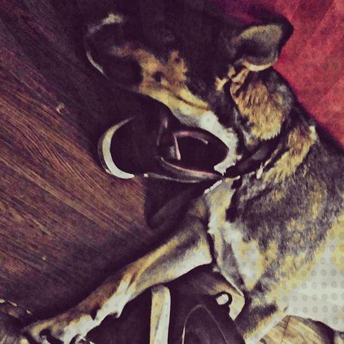 So much love for Achilles!!! Coolestdogever