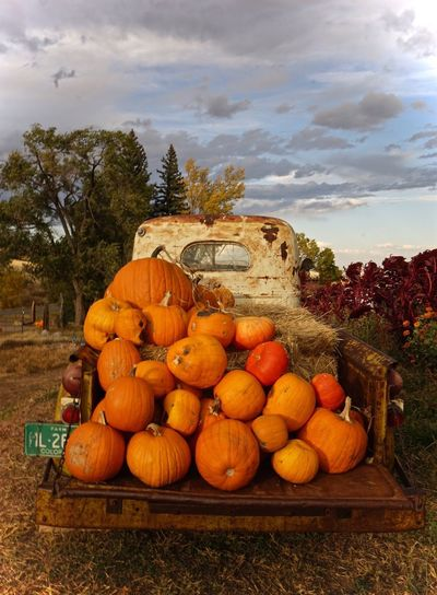 The Drive Pumpkin Sky Outdoors No People Jack O Lantern Roadtrip Truck Vintage Vintage Car Countryside Finding New Frontiers