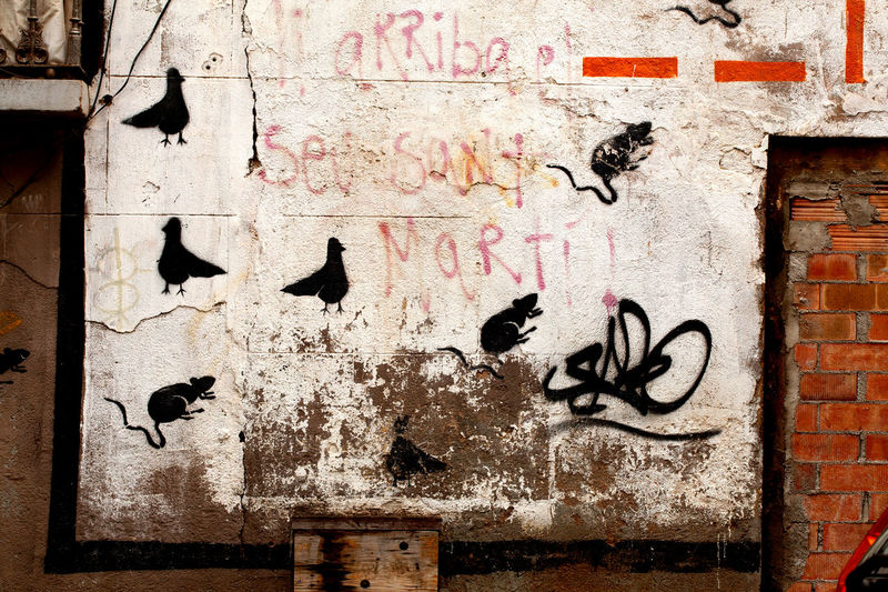 Graffiti on outside wall, Barcelona, Spain. Bad Condition Barcelona Building Exterior Built Structure City Day Graffiti No People Outdoors Pidgeons Pidgeons Birds Sky Rats Social Commentary Statement Urban Weathered