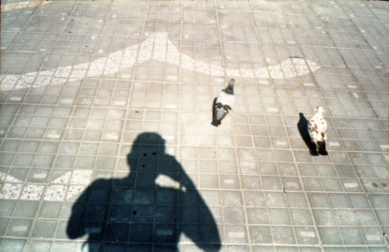 Taking Photos Of People Taking Photos Day High Angle View Outdoors Shade Portrait Shadow Shoot The Shadow Sparrow Sunlight The Week On EyeEm EyeEmNewHere