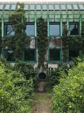 Architecture Abandoned Green Color Plant Tree Building Exterior Window Built Structure Outdoors No People Day Ivy Growth Nature Botanical Gardens Roof Rooftop Terrace Rooftop Garden Garden Green Color Urban Urban Geometry Symmetry Library University