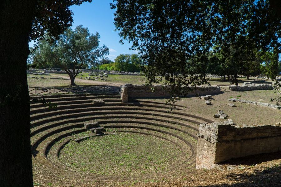 Paestum Roman ruins, Italy Plant Tree Growth Nature Sunlight No People Day Formal Garden Land Tranquil Scene Field Garden Scenics - Nature Outdoors Tranquility Green Color Pattern Beauty In Nature High Angle View Park