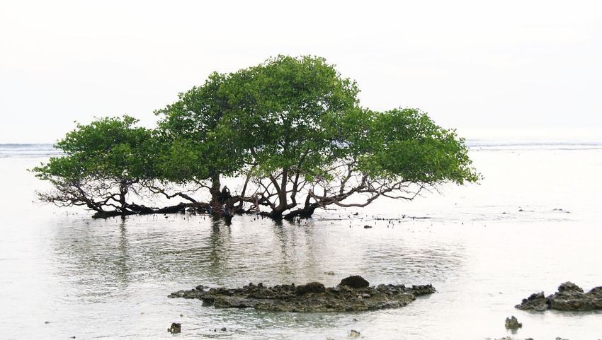 Beach Gili Trawangan Lombok INDONESIA Wonderful Indonesia Tree