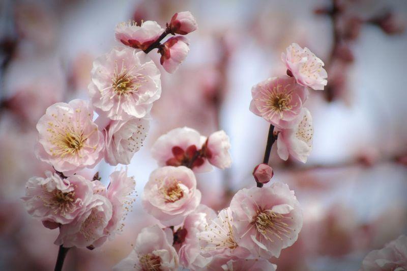 暖かいですね〜♪明日あたり、名古屋では桜の開花宣言が出るらしいと噂がしきり♪って出てないってこと?(笑)