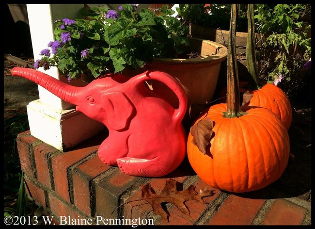 My gals brought 2 lil' spookies home Pumpkins On The Porch Flowerpots Elephant