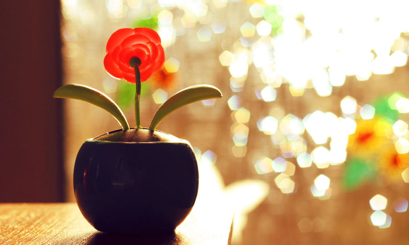 Close-up Decoration Flower Focus On Foreground Fragility Freshness Glass - Material Growth Home Interior Indoors  Lighting Equipment No People Orange Color Petal Plant Red Rose - Flower Stem Table Vase