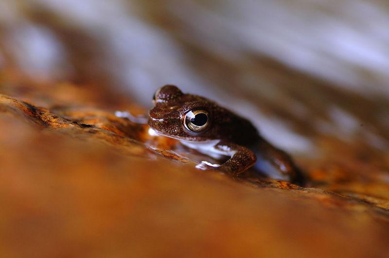 Macro Shot Of Frog On Rock